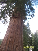 Sequoia -Yosemite 6-2011 109