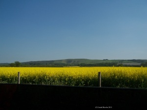 Rapeseed field from highway