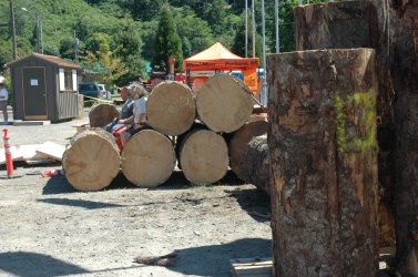Logs for chainsaw carving competition