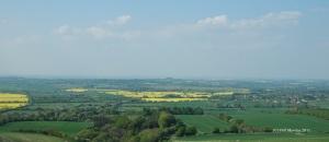Yellow fields and hillside