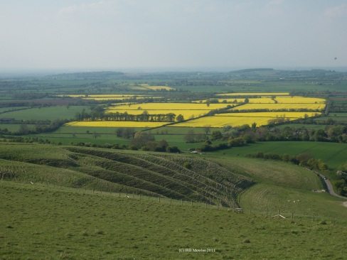 English fields of Rapeseed