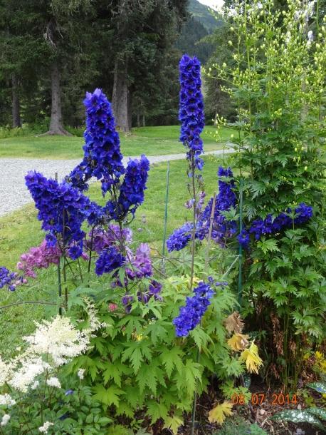 Flowers at Hotel Alyeska, Alaska