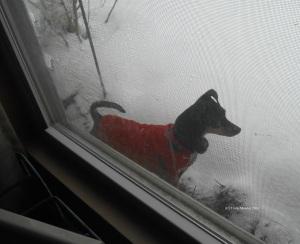 Snowy Cuddles by window