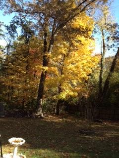 Backyard beauty in the fall.