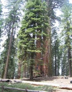 Seedlings in Yosemite National Park