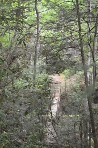 Wooden bridge across creek in the Smokey Mountains
