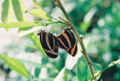 Butterflies - getting to know you!