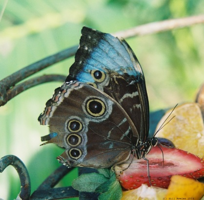 Butterfly close up (C)