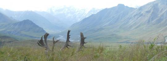cropped-mountains-view-in-alaska-c.jpg
