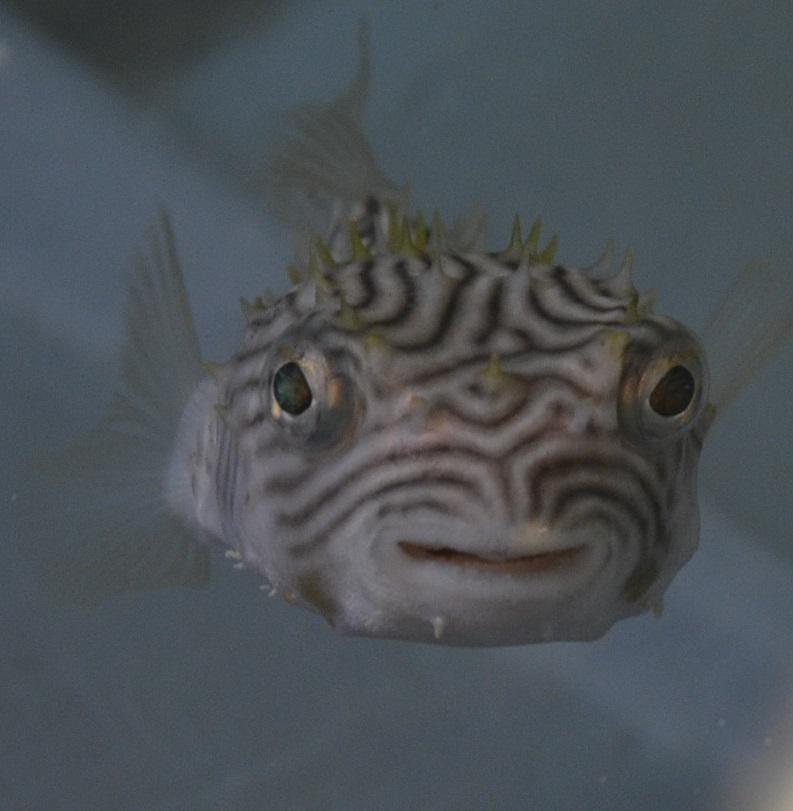 Fish from Mississippi Marine exhibit 8