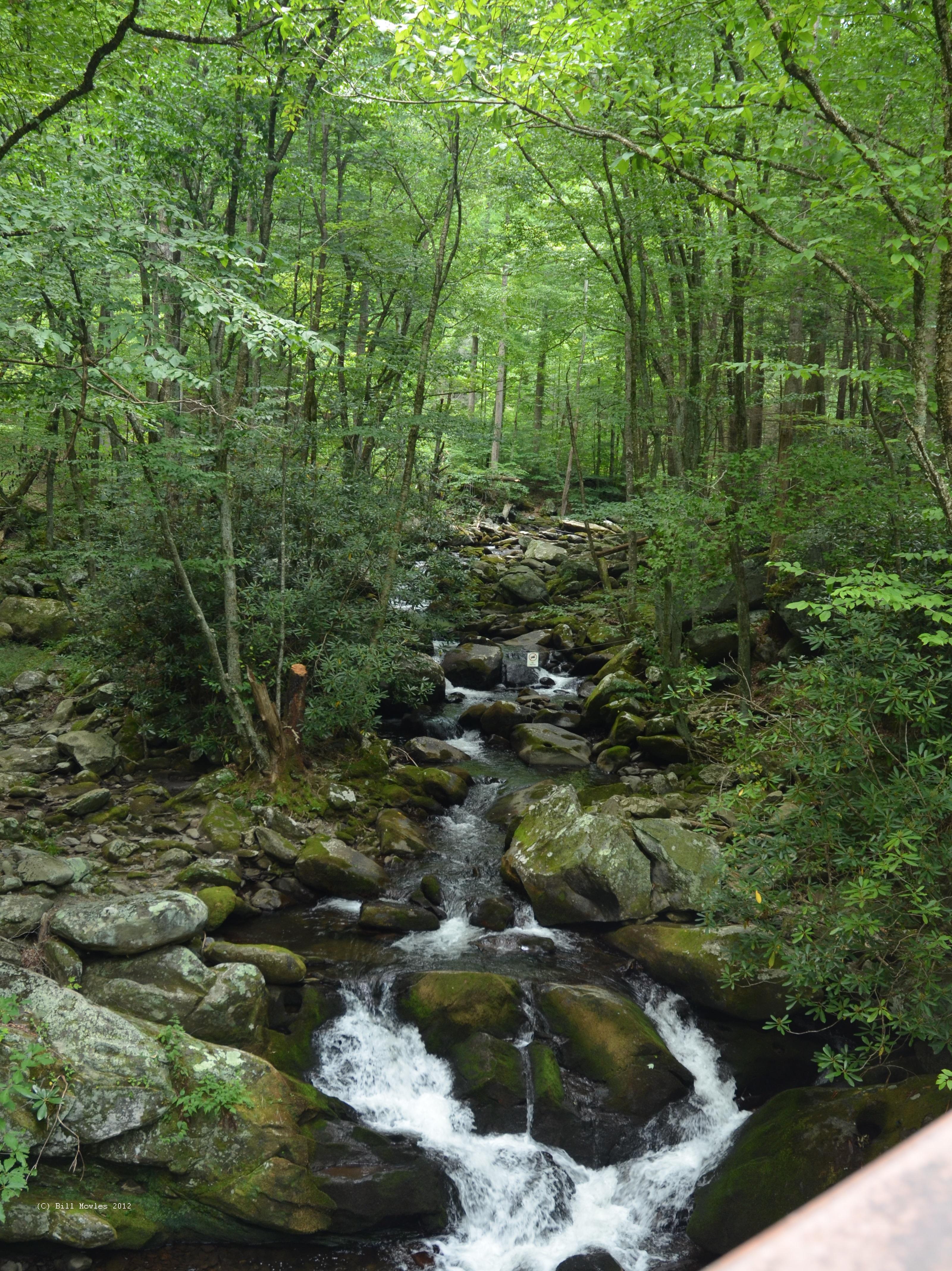 Rapids in stream (C)