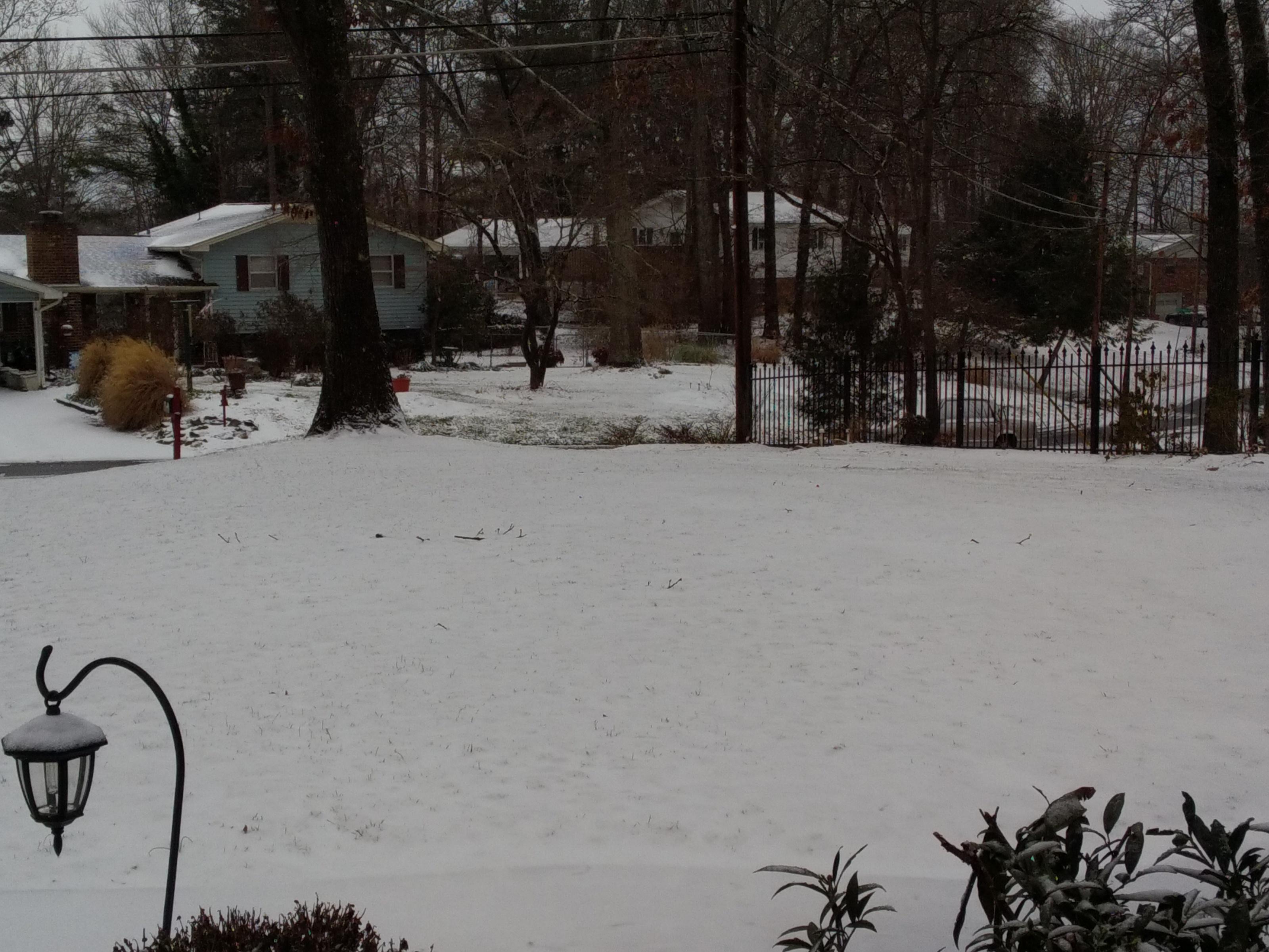 Snow - front yard