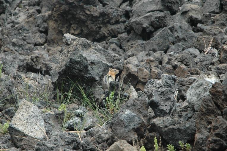 Chipmunk in cinder cone (C)Oregon 2009 232
