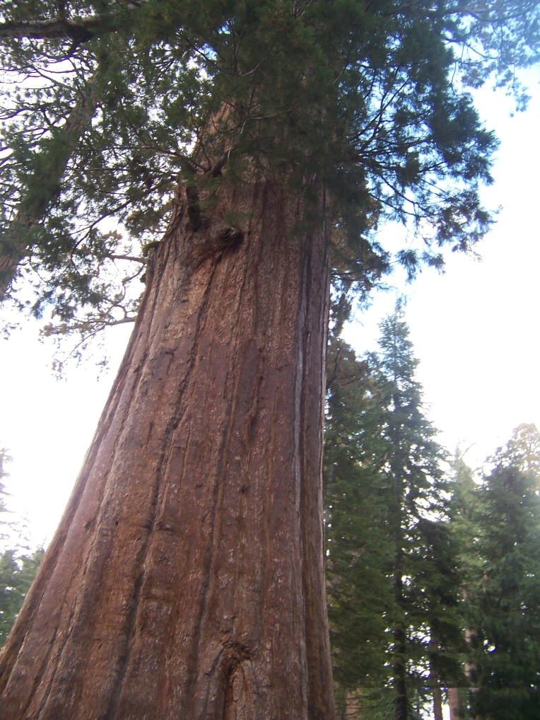 Sequoia -Yosemite 09 (C)