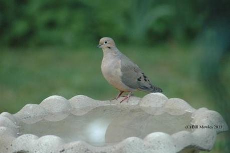 bird-2-c