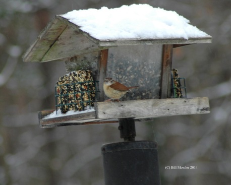 bird-winter-food-c
