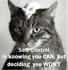 cat-exercising-self-control