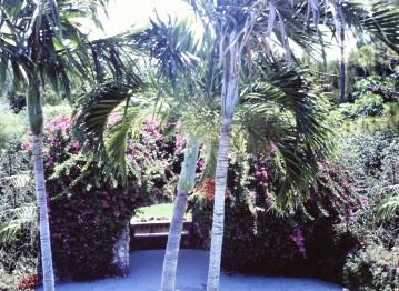 garden-walkway-parrot-jungle