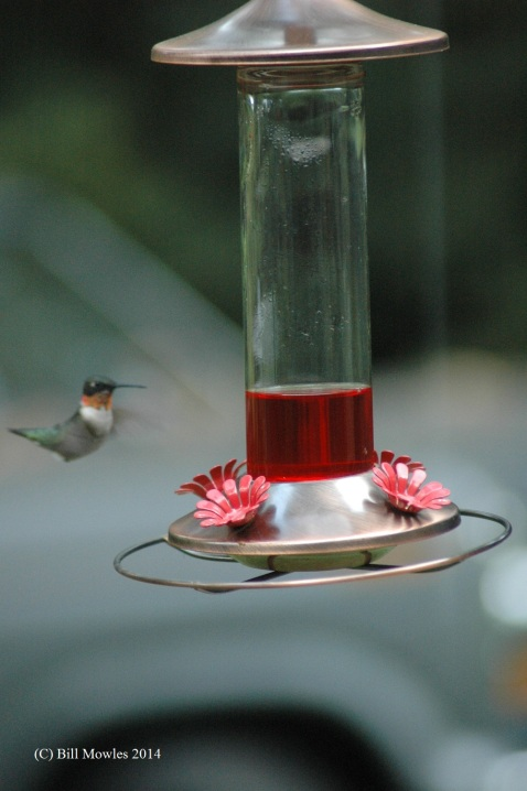 hummingbird-at-feeder-c