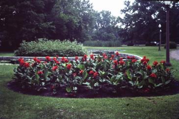 used-flower-garden