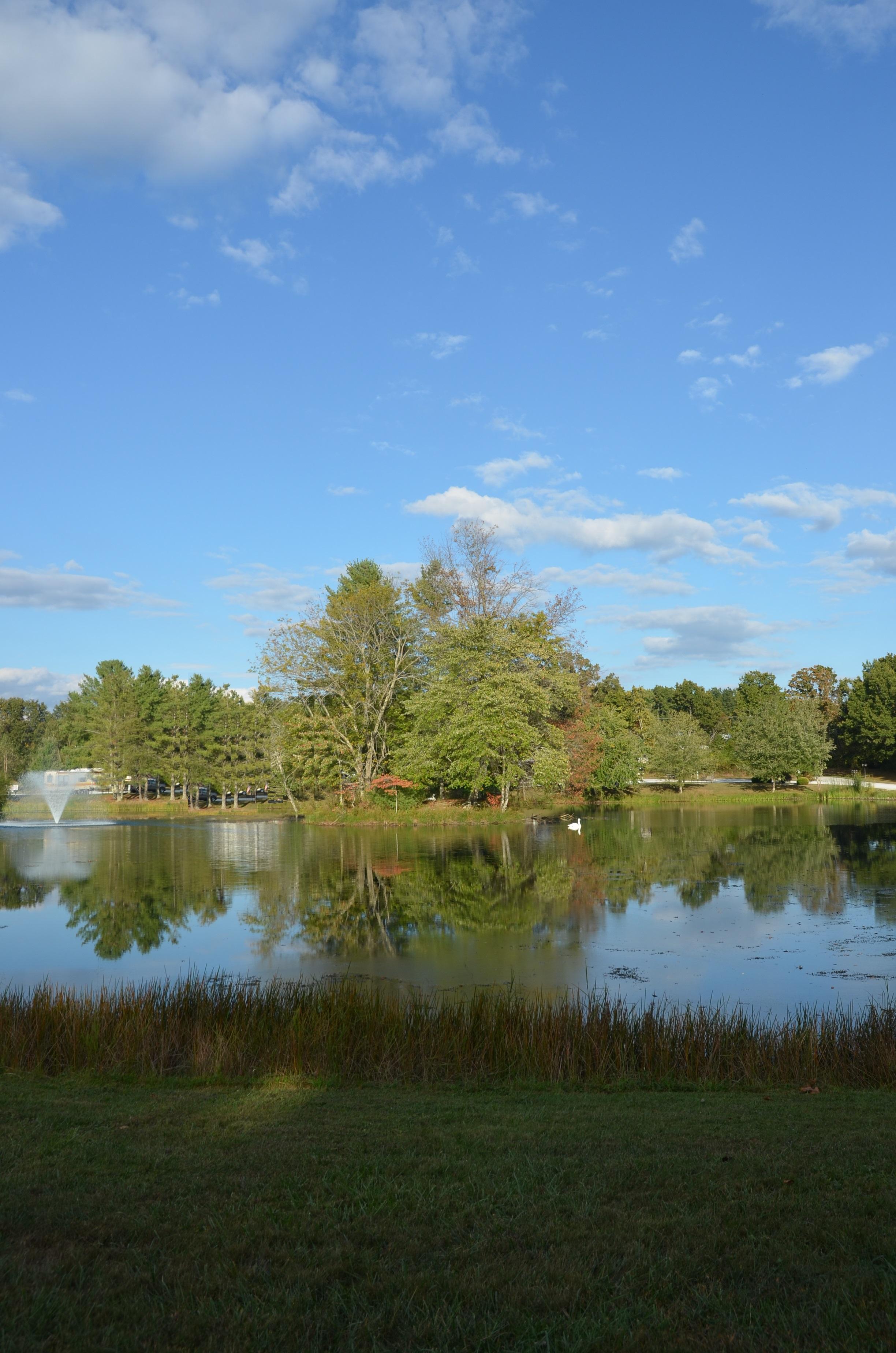spring-lake-island-swan-and-fountain