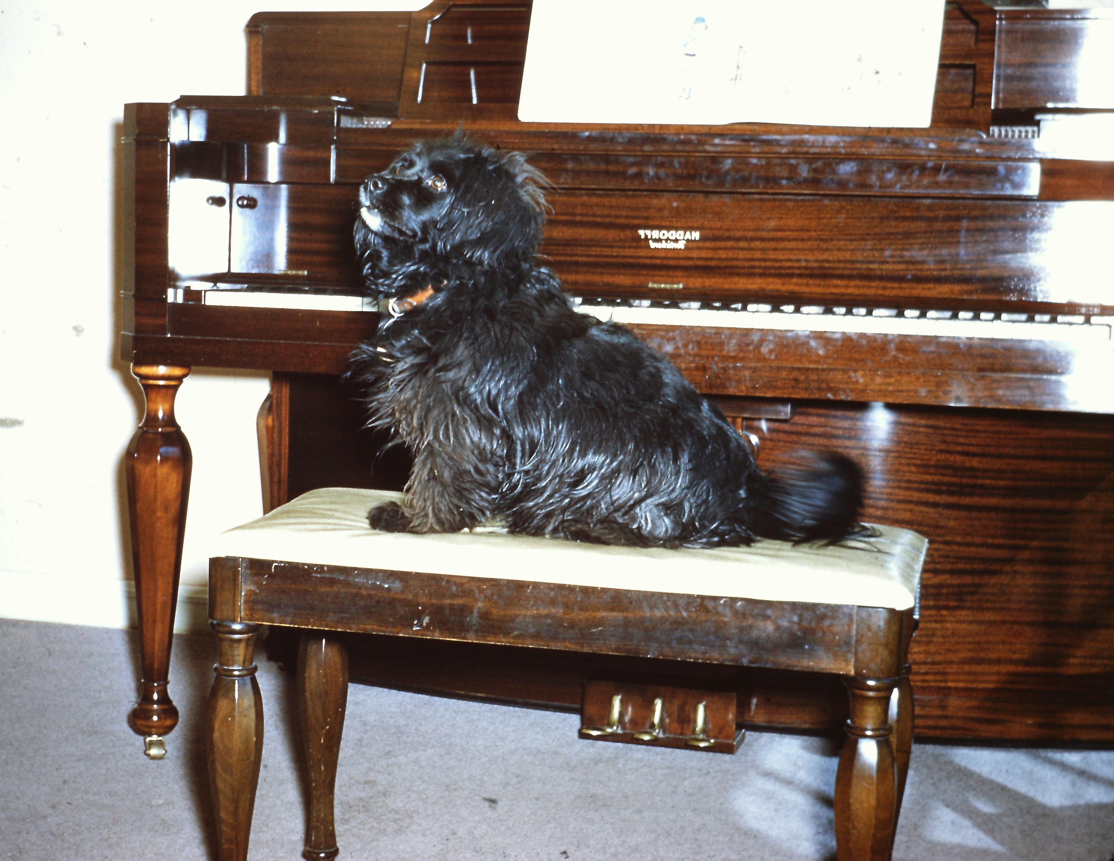 tippy-at-the-piano