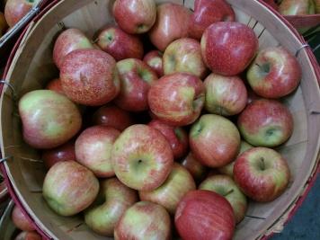 carvers-orchard-10-2016-apple-basked