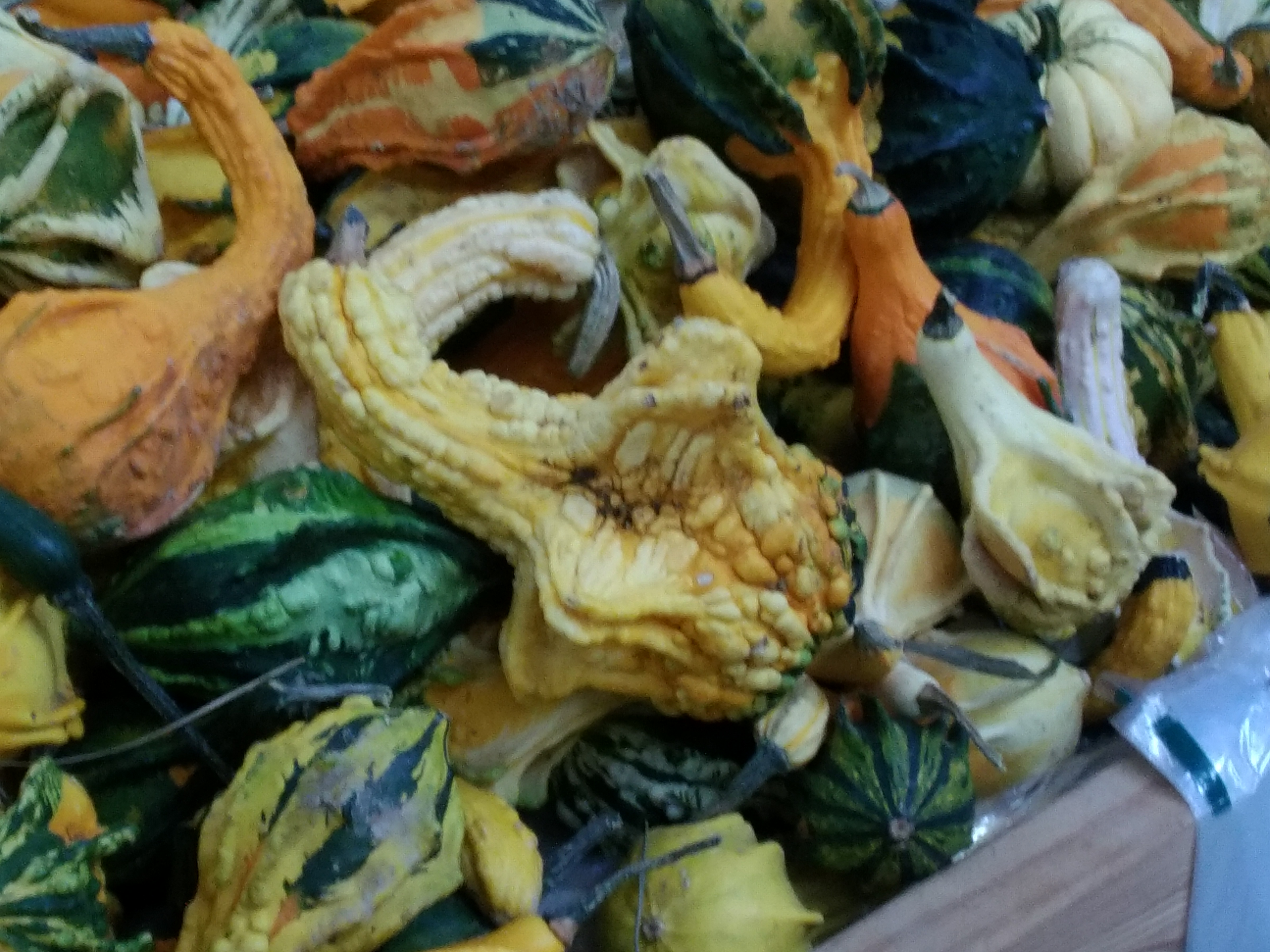 carvers-orchard-10-2016-winged-gourds
