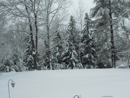 snowy-tranquility-c