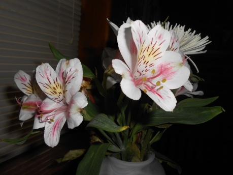 flowers - lilies