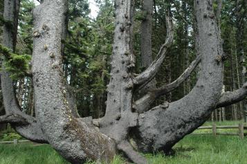 Oregon 2009 435