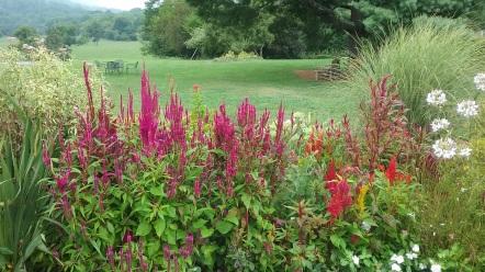 Jefferson vineyard and gardens grounds Charlottesville VA