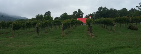 The vineyard and the church