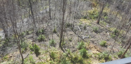Gatlinburg woods 1 year after forest fires