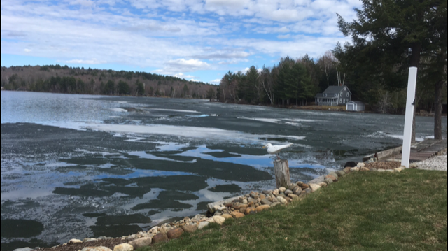 Lake in Maine with ice breaking up - chiming sounds echoing from the ice
