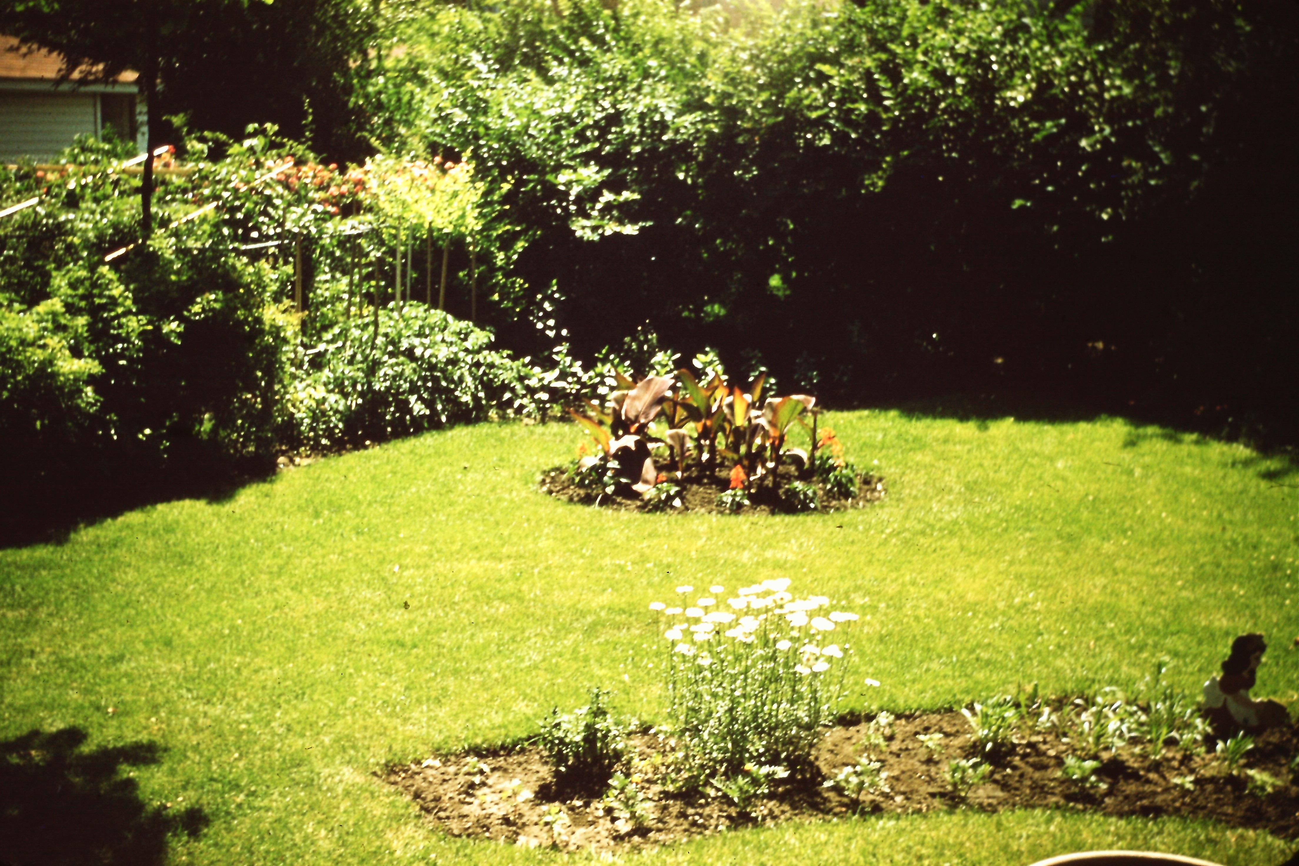 Tended flower garden in back yard