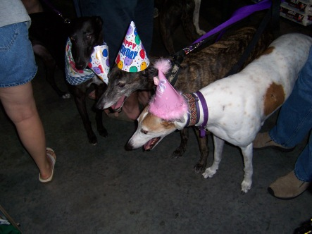 Doggie party