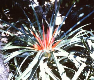 Miami colorful cactus