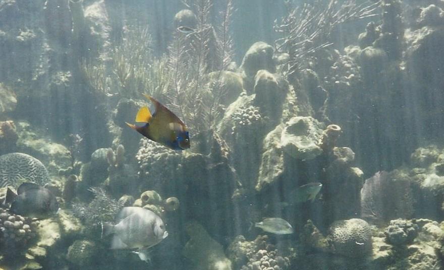 Nassau - colorful fish swimming past