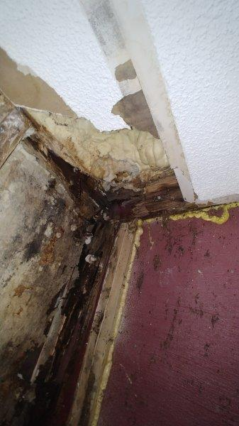 mold damage 0708191104b