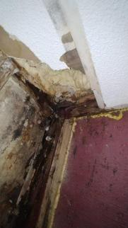 mold damage 0708191104b