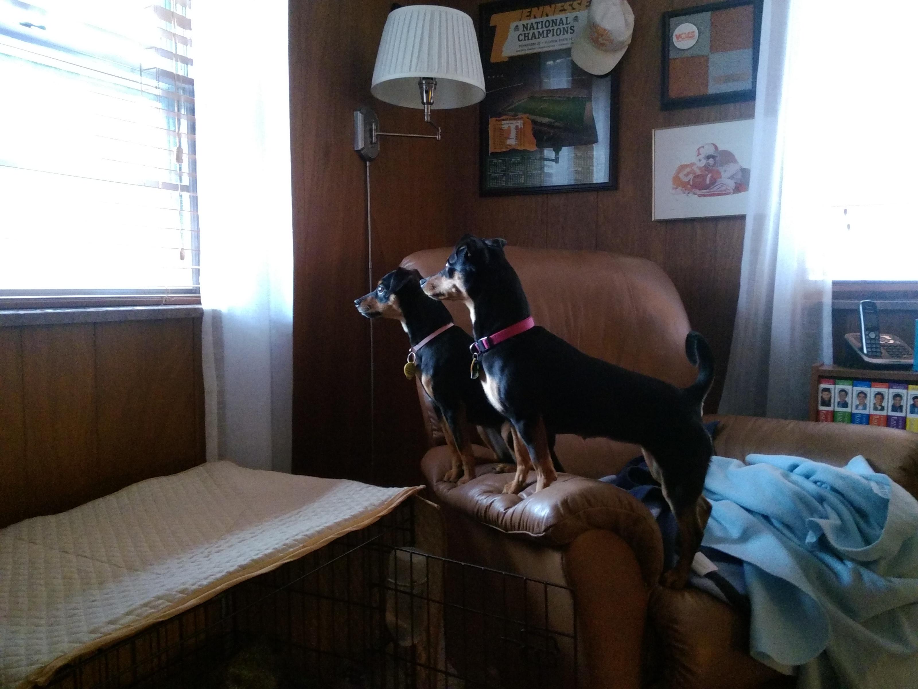 On guard through the window