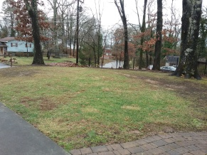 Yard without leaves